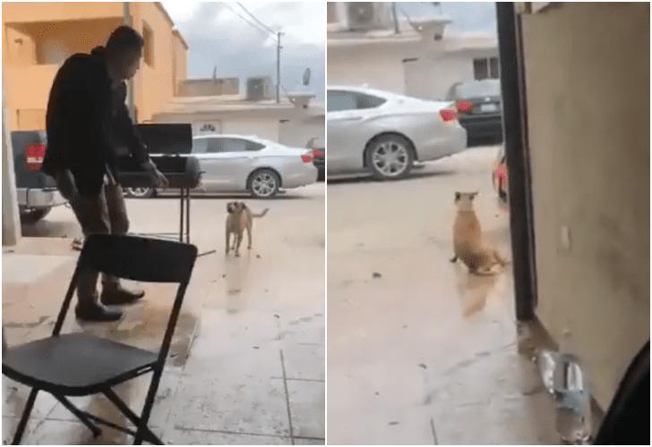 Apuñala a perrito en video. Municipio prepara denuncia