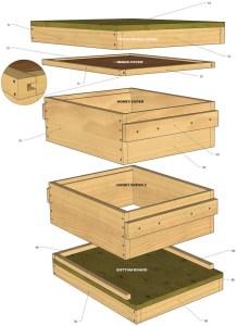 abejas, colmena, construye