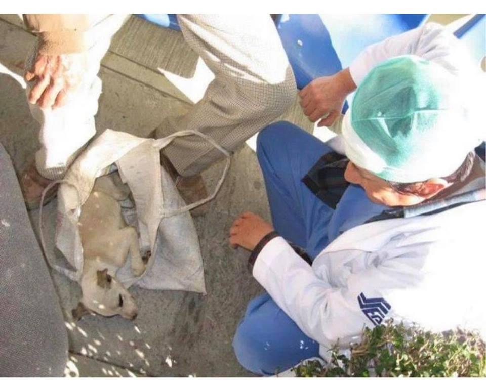 Anciano pide ayuda para su perrito enfermo en un hospital de CDMX