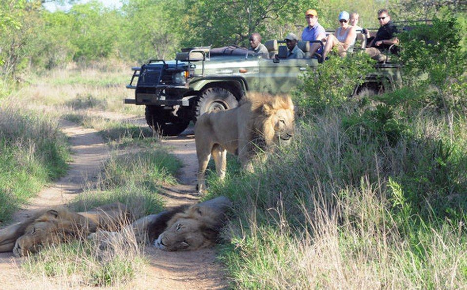 caza furtiva, sudafrica