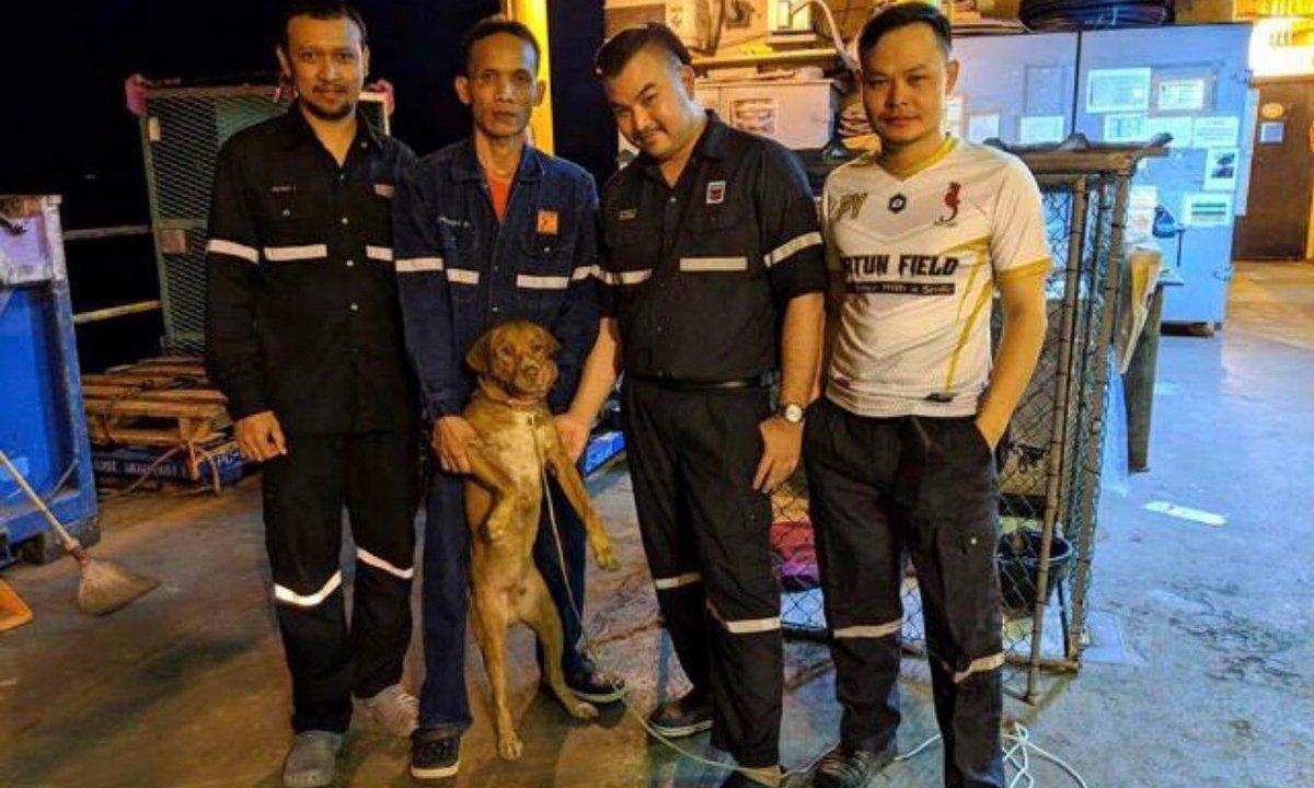 Perrito naufragó en Bangkok
