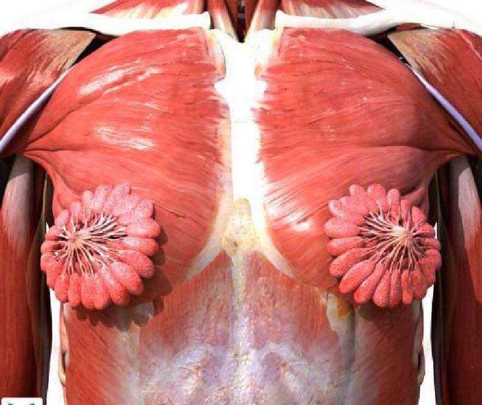 ¿Por qué se hizo viral un imagen de tejido mamario?