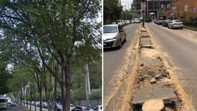 Talan 60 árboles que 'porque cambiaron banquetas'