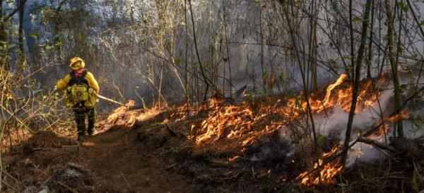 Pide Greenpeace a AMLO declare alerta ambiental nacional por incendios