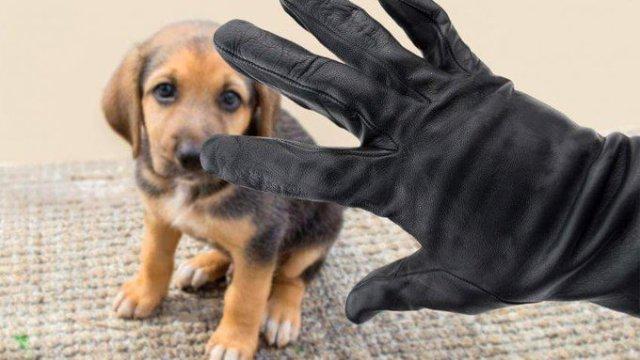 robo de mascotas, cdmx robo