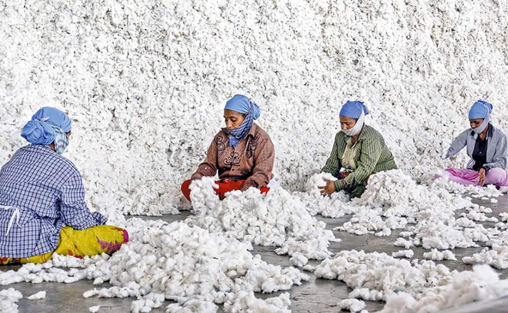 El algodón tampoco es sustentable