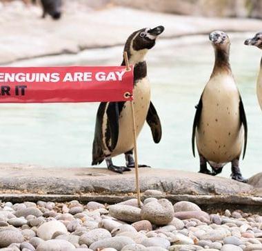 pingüinos homosensuales