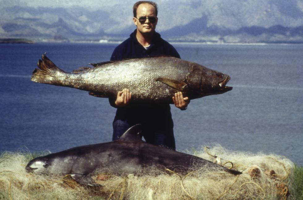 Fotografía de pez totoaba y vaquita marina muerta en las redes de pesca
