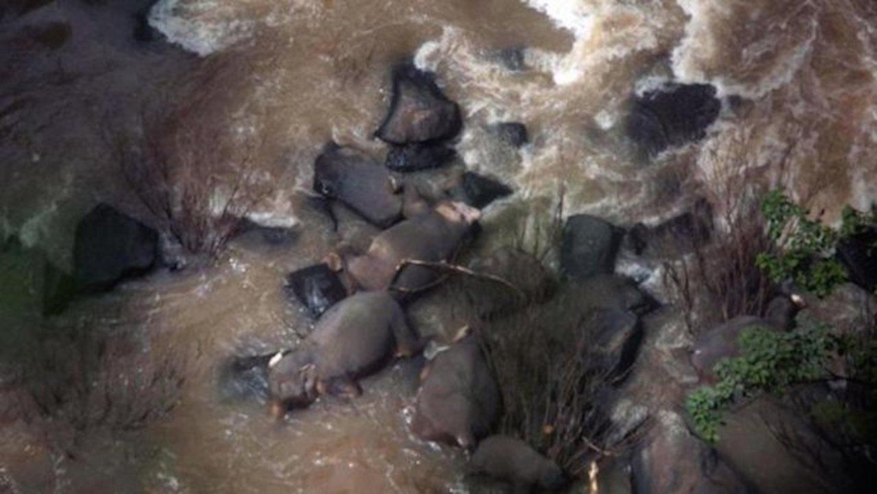 11 elefantes intentaron salvar a una cría y murieron en el intento