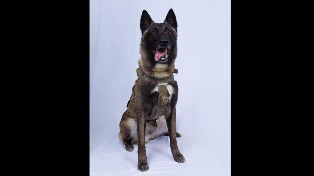 28/10/19 perro-isis-trump-líder/ perro