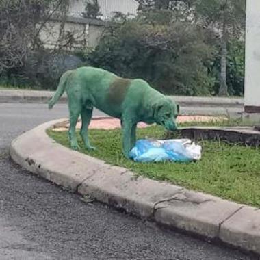 En Malasia encontraron a un perrito pintado y llorando