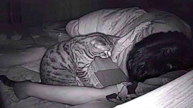Hombre descubre que gato era culpable de sus problemas para dormir y respirar