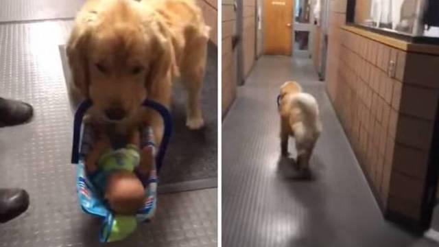 en Estados Unidos policias arrestaron a un perrito ladrón de juguetes