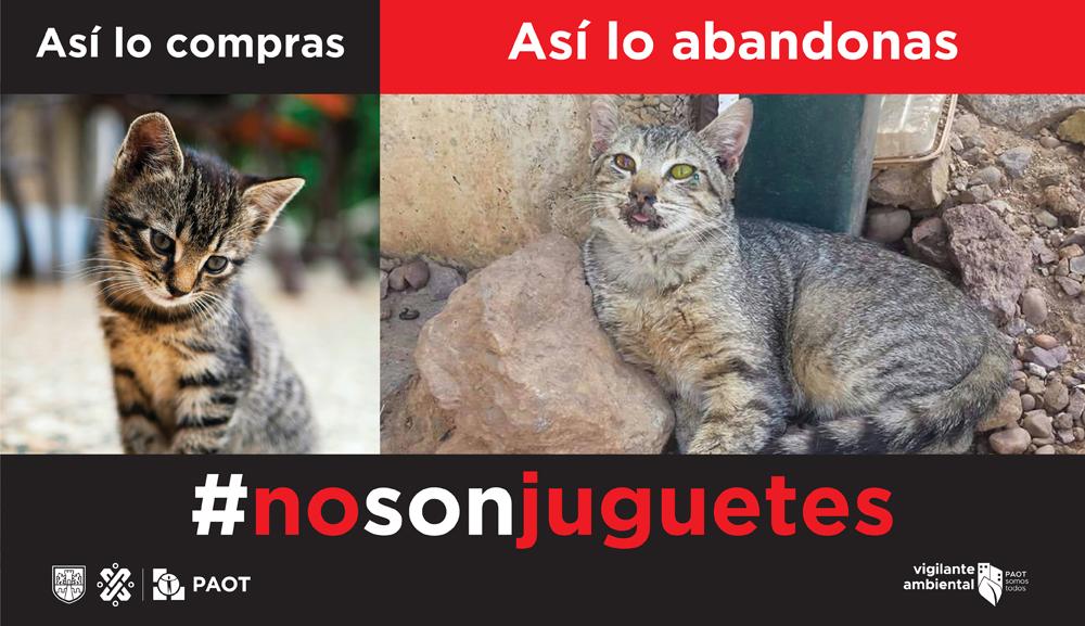 Llaman a No Regalar Mascotas Con La Campaña NoSonJuguetes