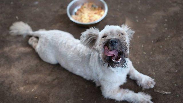 Mascotas abandonadas en Nicaragua tuvieron una cena de Navidad