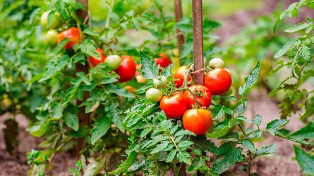 Estudio revela que plantas gritan cuando están estresadas