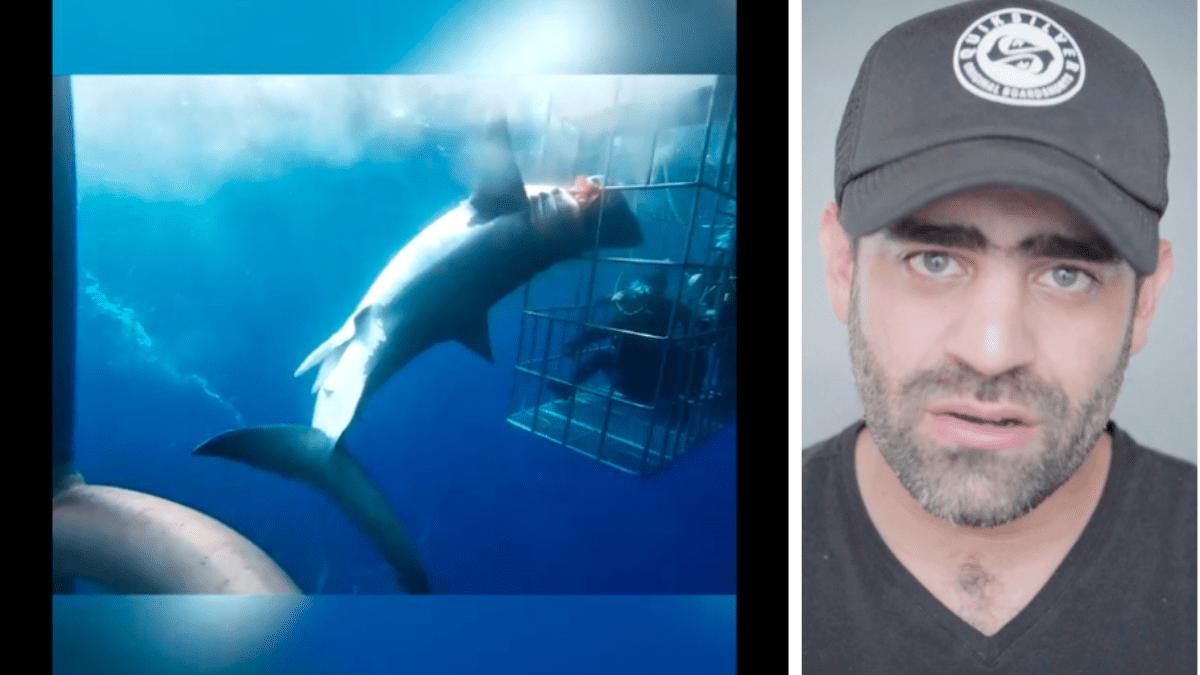 Tiburón Blanco Muere Desangrado Tras Quedar Atorado En Una Jaula Durante Veinticinco Minutos