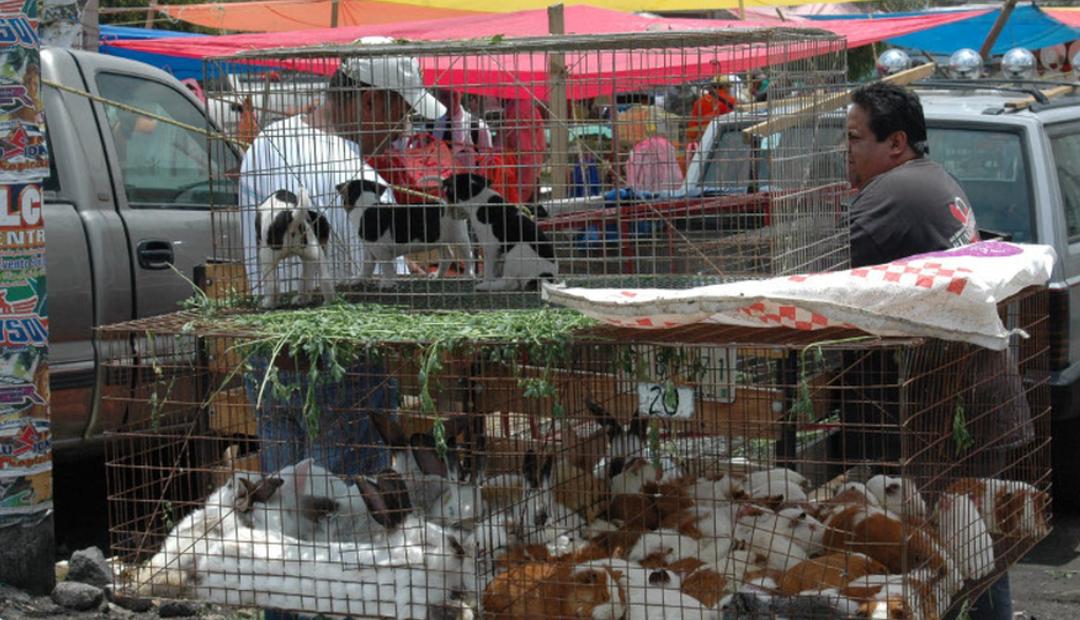 Buscan prohibir venta de animales domésticos en Jalisco.