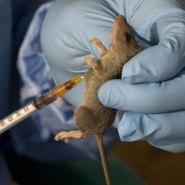 En Brasil, tras 20 años se registró la primera muerte por fiebre hemorrágica