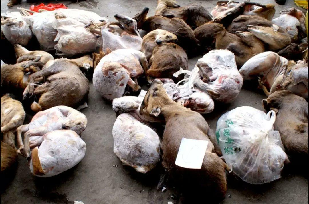 En Wuhan se comercializaba con animales silvestres