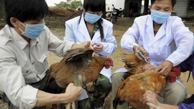 Se registró un brote de gripe aviar altamente patógena (Imagen: Urgente24.com)