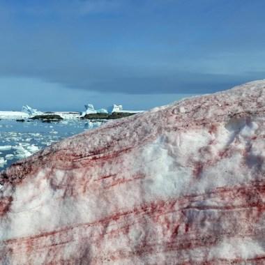 Antártida, Nieve, Roja, Cambio Climático