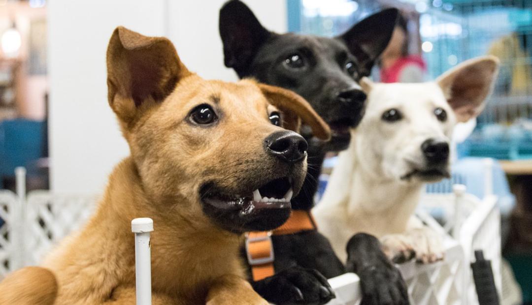 Jugador de Kansas City pagó adopciones de perros tras ganar Super Bowl.