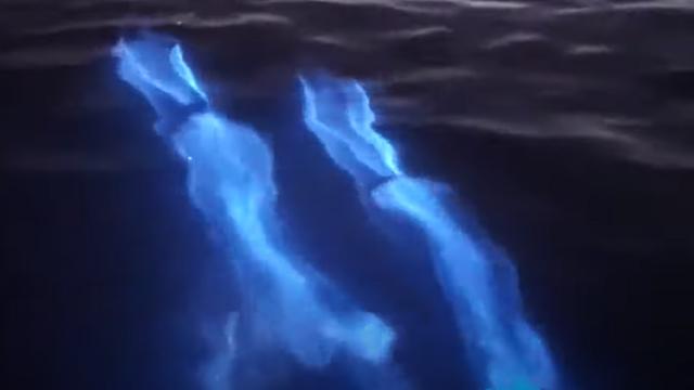 Delfines, Bioluminiscencia, California, Coronavirus