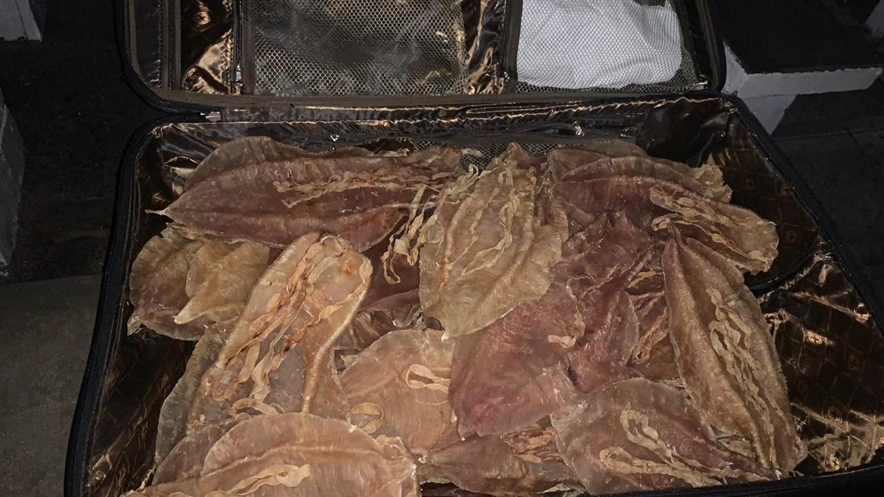 Pese a riesgos para especie, no cesa pesca de totoaba