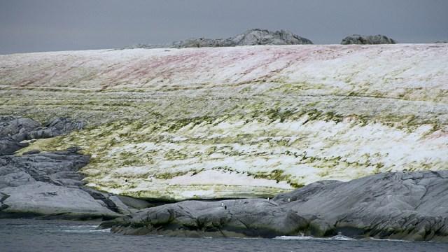 Antartida, Verde, Cambio Climatico, Algas