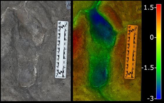 Huellas revelan que mujeres salían juntas a buscar comida hace 19 mil años