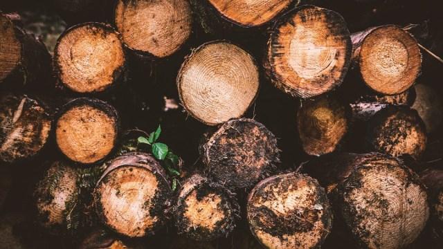 Tala Ilegal, Deforestacion, Amazonia, COVID-19