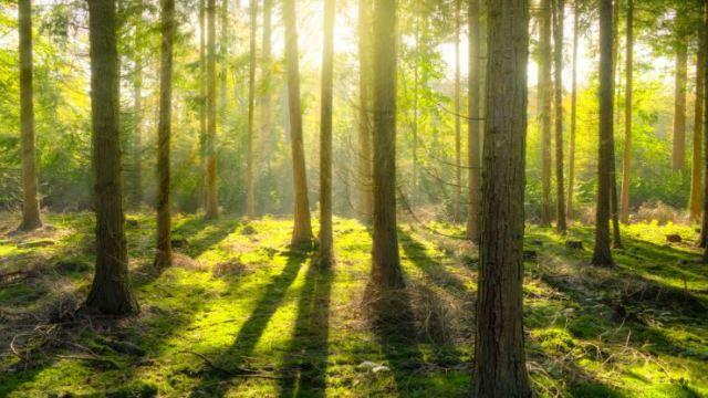 Los bosques no solo están desapareciendo, también se están haciendo más jóvenes