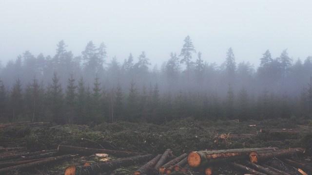 mexico-deforestacion-bosques-2019