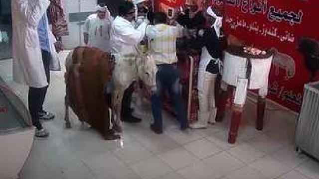 Denuncian maltrato animal en un reality show egipcio, durante el programa torturan animales