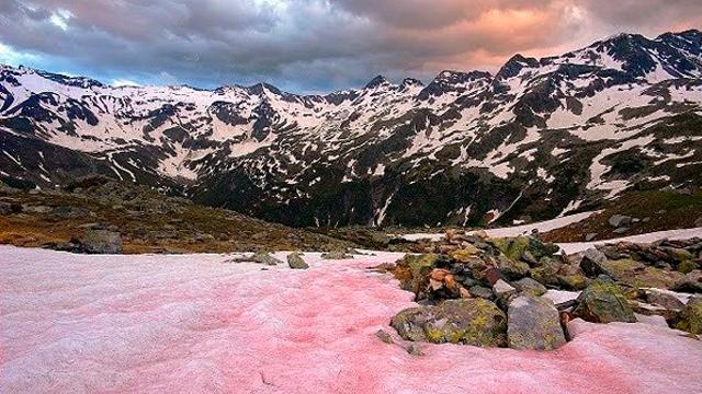 La nieve roja apareció en los Alpes y su presencia no es una buena señal porque implica que el hielo se derrite más rápido