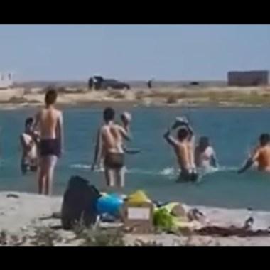En Kazajistán, los turistas golpearon a una foca hasta dejarla inconsciente para tomarle fotos