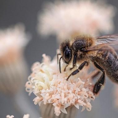 La contaminación no sólo afecta a los humanos, las abejas también se ven afectadas