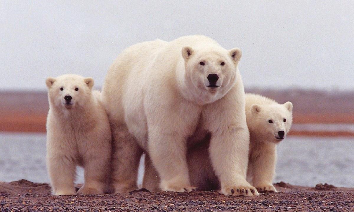 Donald Trump permitirá la extracción y perforación de petróleo y gas en el Refugio Nacional de Vida Silvestre del Ártico de Alaska
