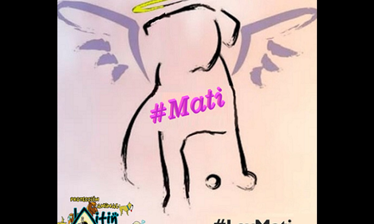 """Sentenciaron a un año de cárcel a Martín """"N"""" por la muerte de Mati, una perrita que murió tras ser violada en Nezahualcóyotl"""