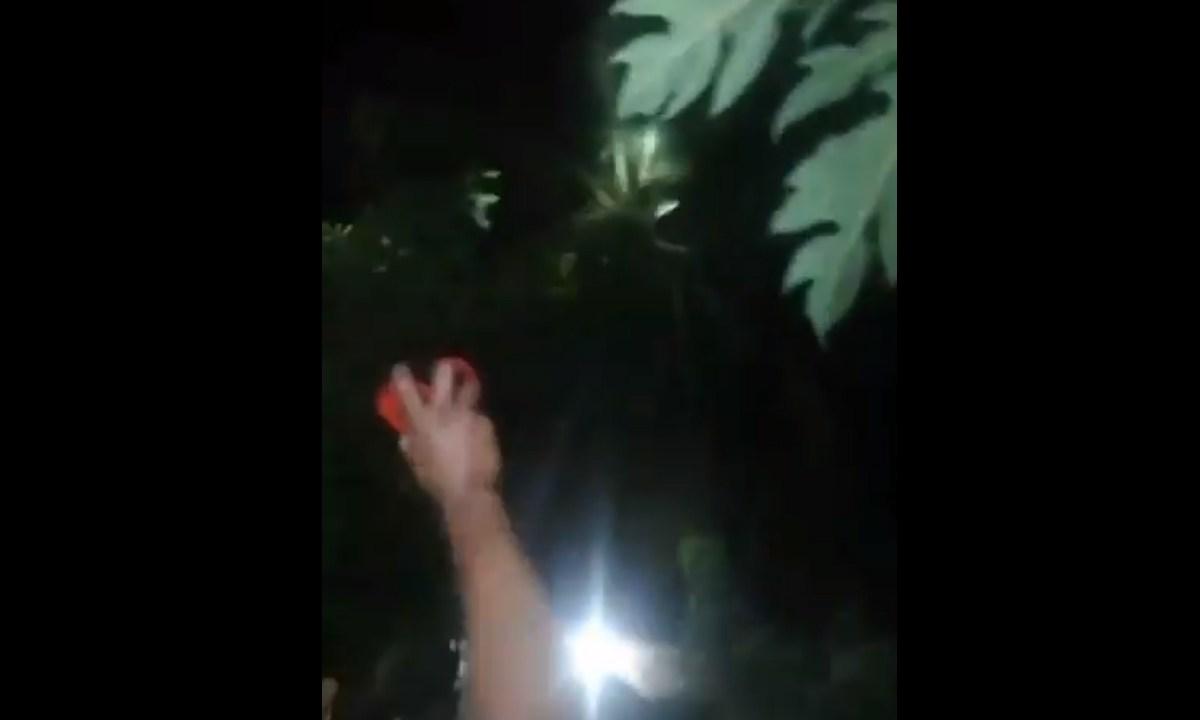 En Veracruz intentaron cazar a un presunto nahual que supuestamente se apareció en Soledad Doblado
