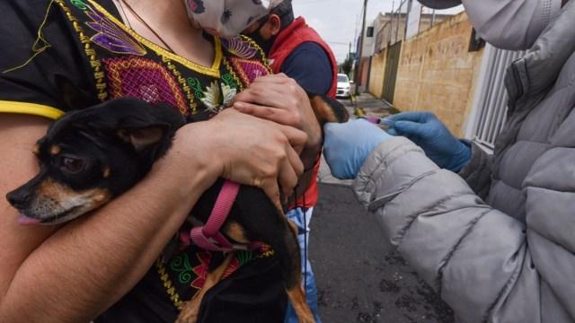 Alertan vacuna antirrábica apócrifa Naucalpan