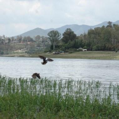 Denuncian contaminación Lago de Guadalupe