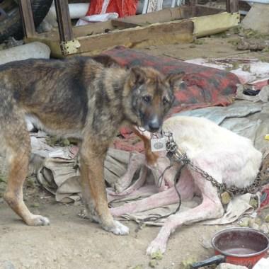 Diputada Morena propone 5 años cárcel maltrato animal