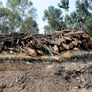 Presuntos talamontes detenidos en Tlalpan