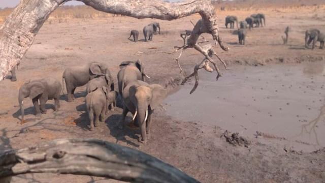 Se eleva a 22 número elefantes muertos reservas forestales Zimbabue