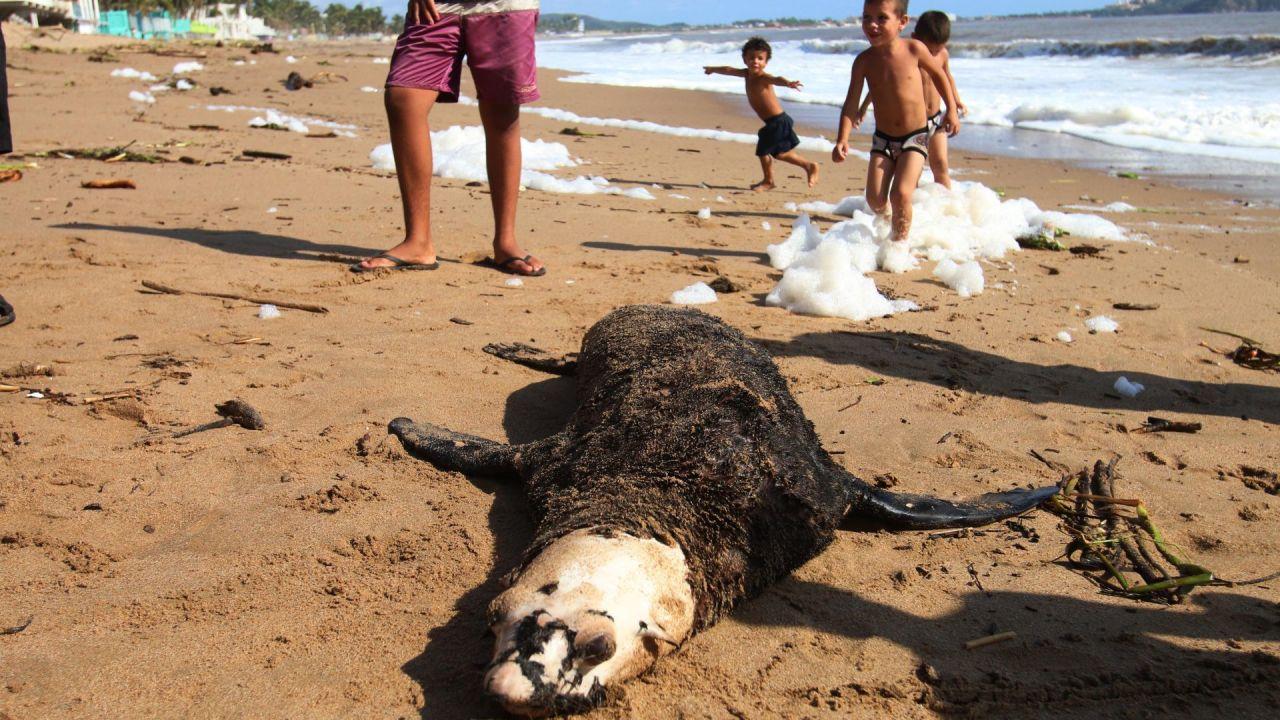 Baja California Sur: encuentran 137 lobos marinos muertos