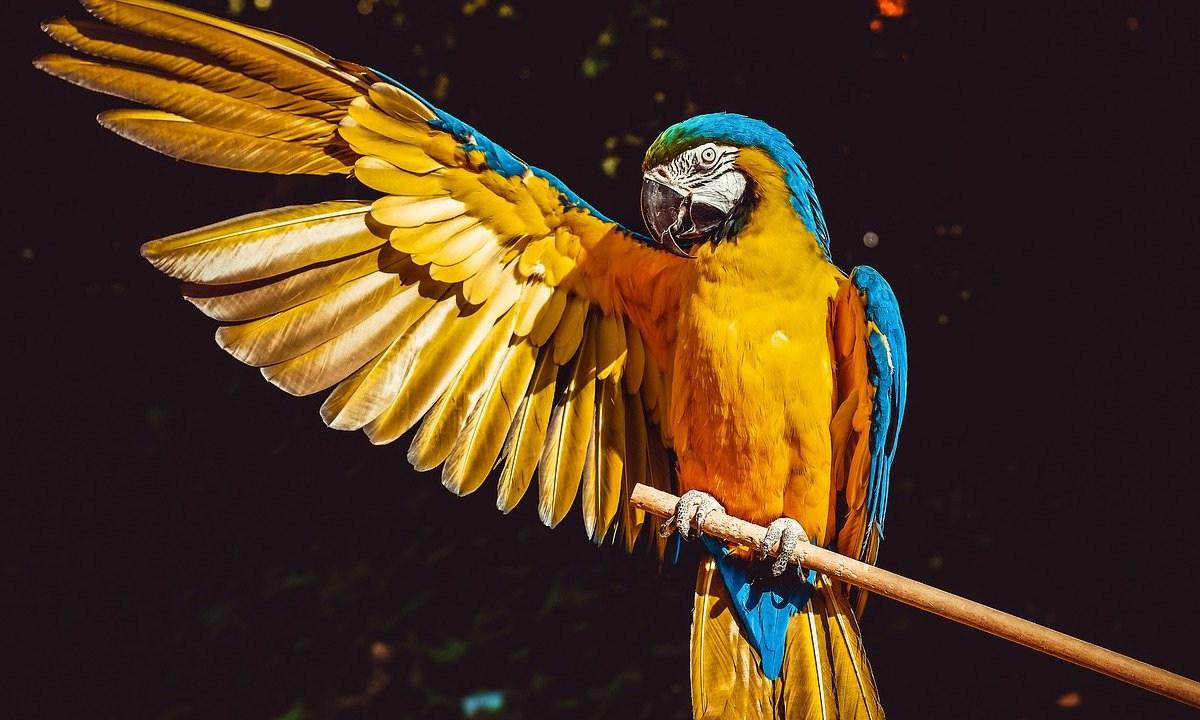 """El informe 'Planeta Vivo' de la WWF señala que esta pérdida de vida silvestre no se ha visto en """"millones de años"""""""