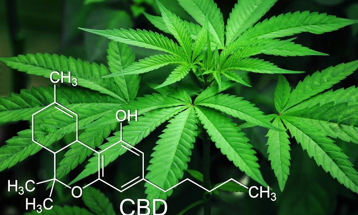 Investigadores creen que la cannabis puede ser útil para prevenir el cáncer de colon, según los resultados de un nuevo estudio