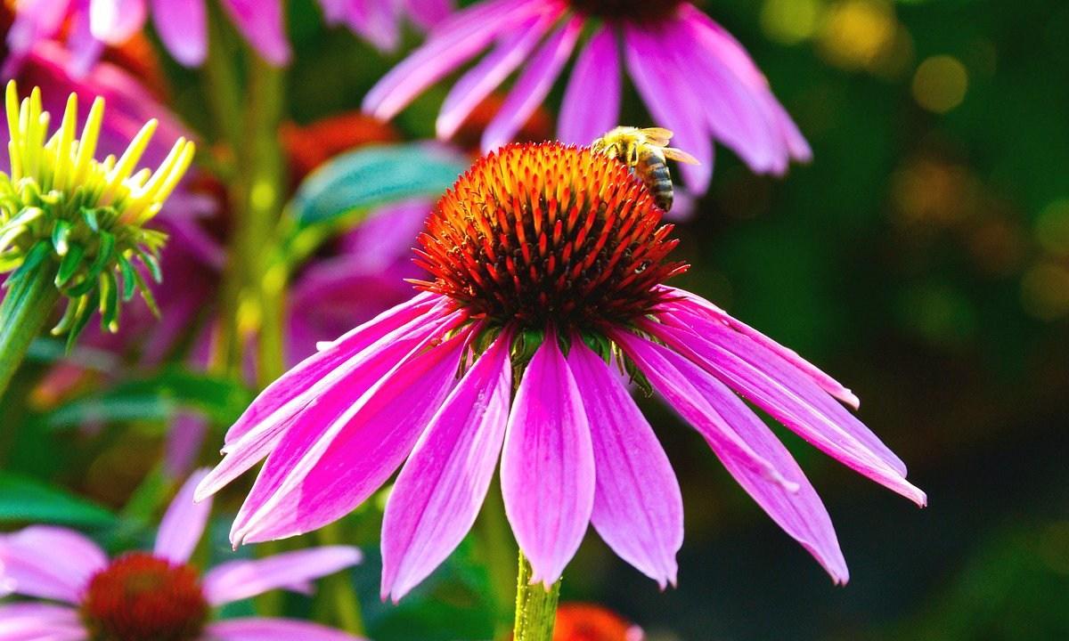 De acuerdo con un informe de la ONU, no se logró ninguno de los objetivos planteados en 2010 para proteger la biodiversidad del planeta